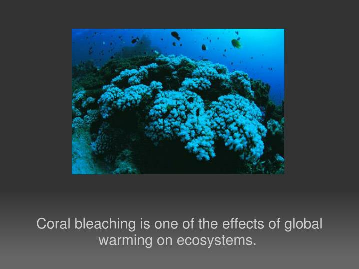 Coral bleaching is one of the effects of global warming on ecosystems.