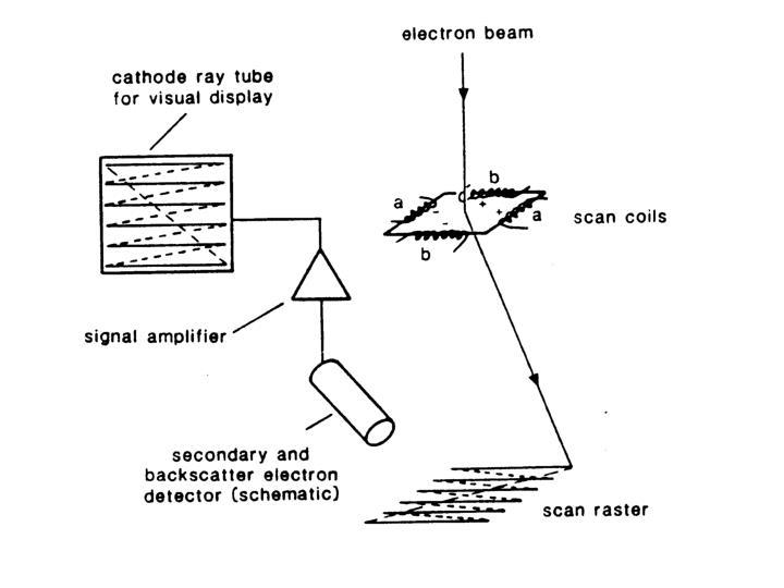 Scanning electron imaging se morphological investigation of a 3 d sample