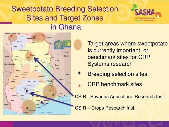 Sweetpotato Breeding Selection