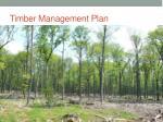 timber management plan