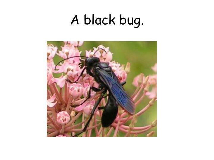 A black bug.