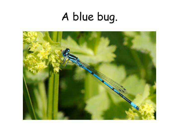 A blue bug.