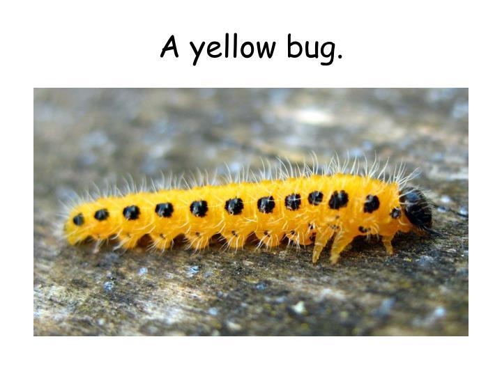A yellow bug