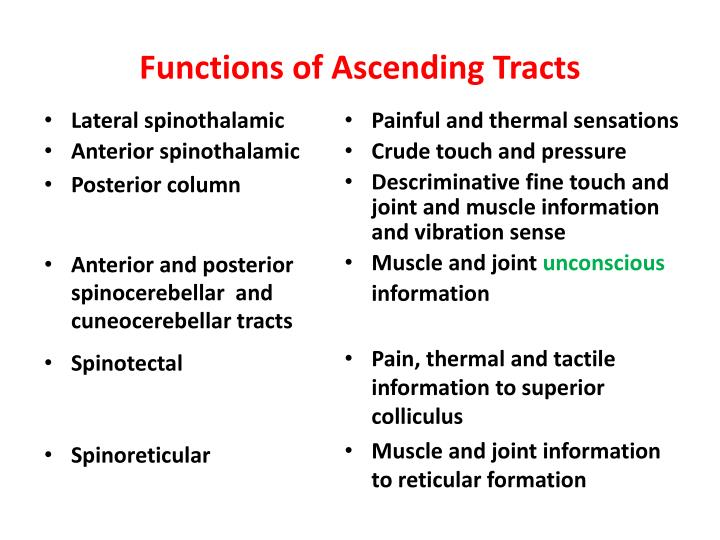 Functions of Ascending Tracts
