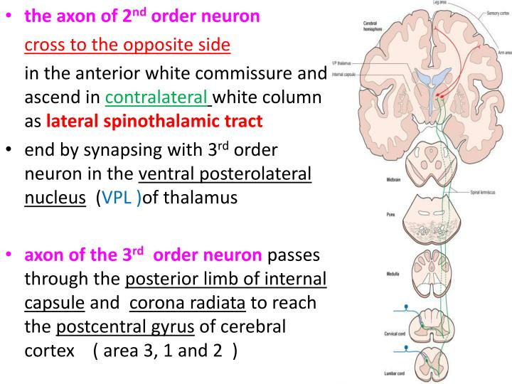 the axon of 2