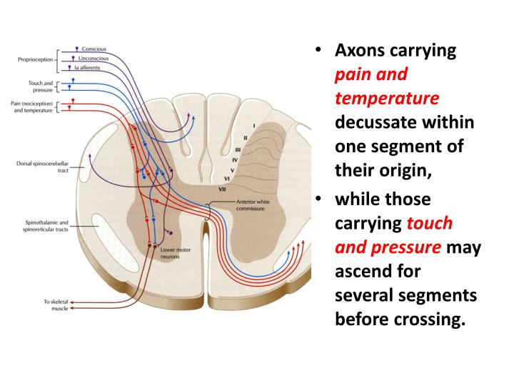 Axons carrying