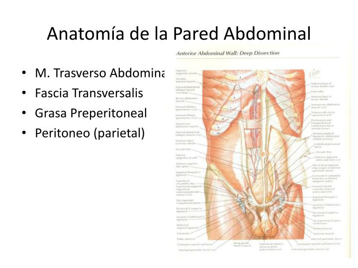 PPT - Hernias de la Pared Abdominal PowerPoint Presentation - ID:1887368