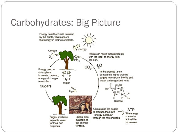 Carbohydrates: Big Picture