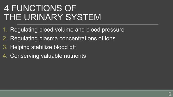 4 functions of the urinary system