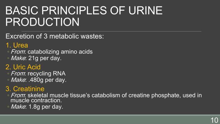 BASIC PRINCIPLES OF URINE PRODUCTION