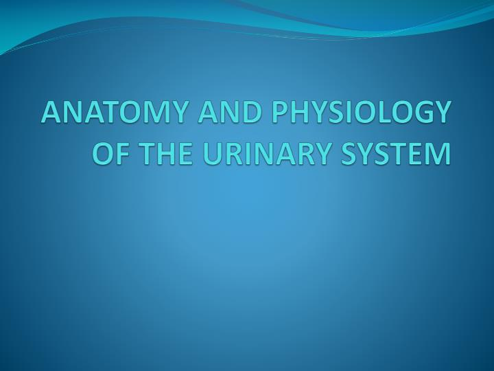 PPT - ANATOMY AND PHYSIOLOGY OF THE URINARY SYSTEM PowerPoint ...