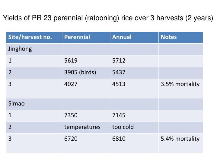 Yields of PR 23 perennial (