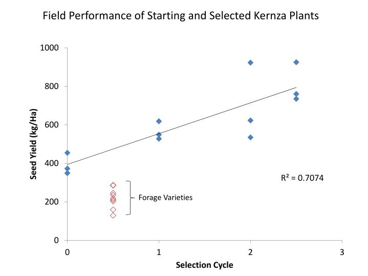 Field Performance of Starting and Selected Kernza Plants