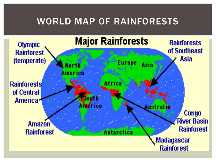 Ppt Tropical Rainforest Powerpoint Presentation Id 1890947