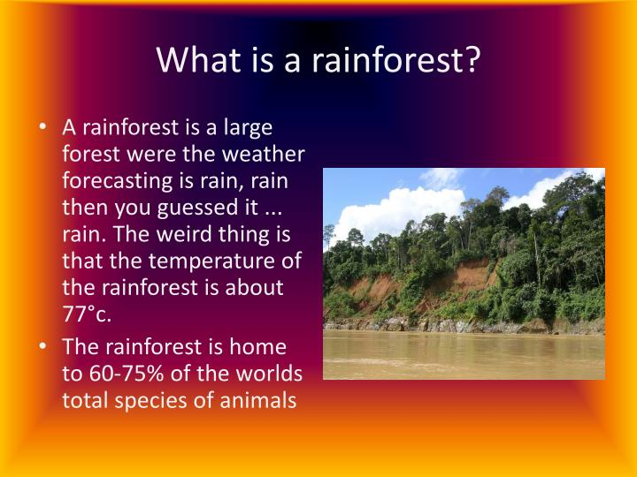 what are rainforests
