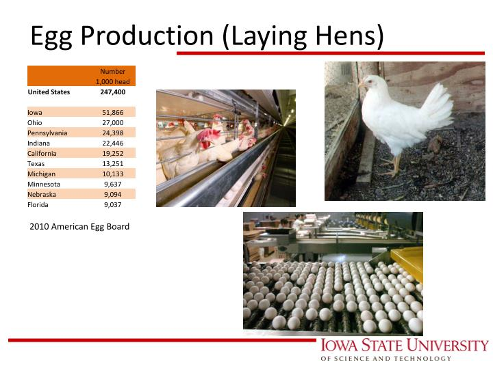 Egg Production (Laying Hens)