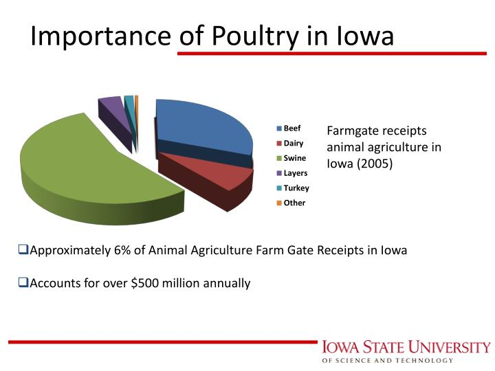 Importance of Poultry in Iowa