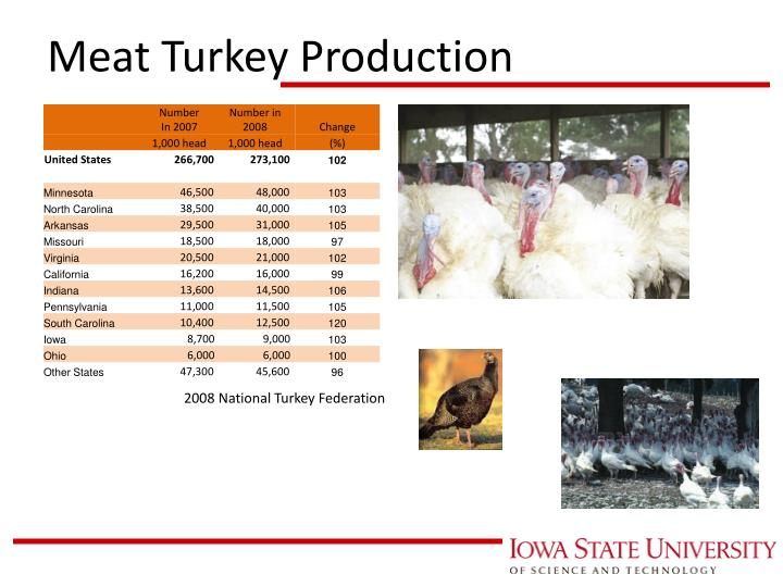 Meat Turkey Production