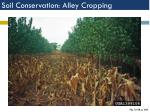 soil conservation alley cropping