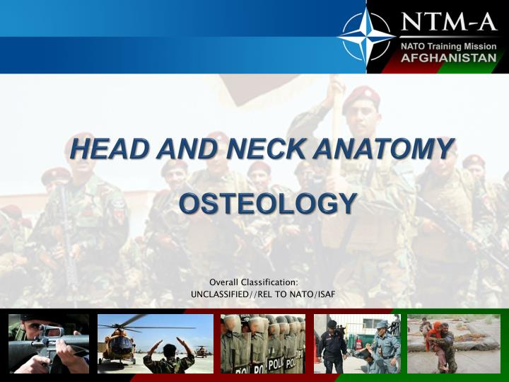 head and neck anatomy osteology n.