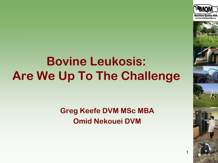 bovine leukosis are we up to the challenge n.