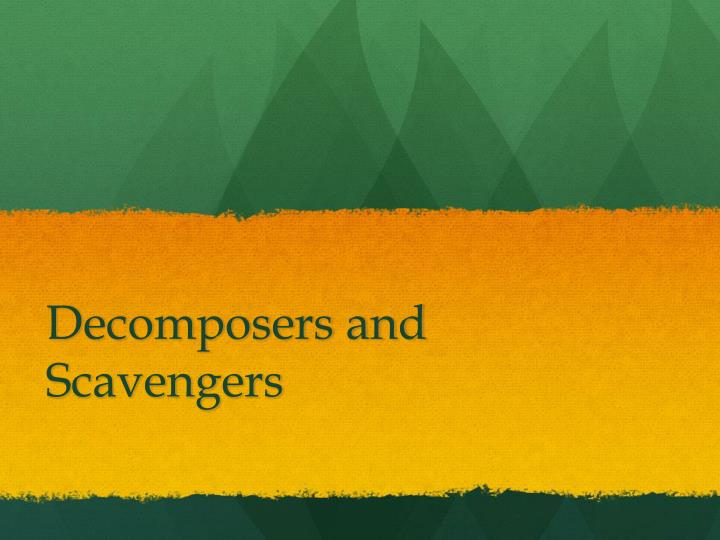 decomposers and scavengers n.