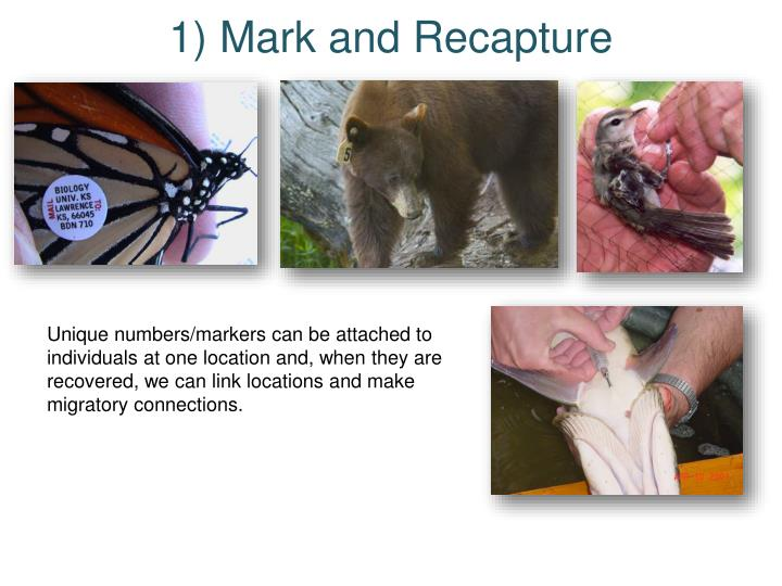 1) Mark and Recapture
