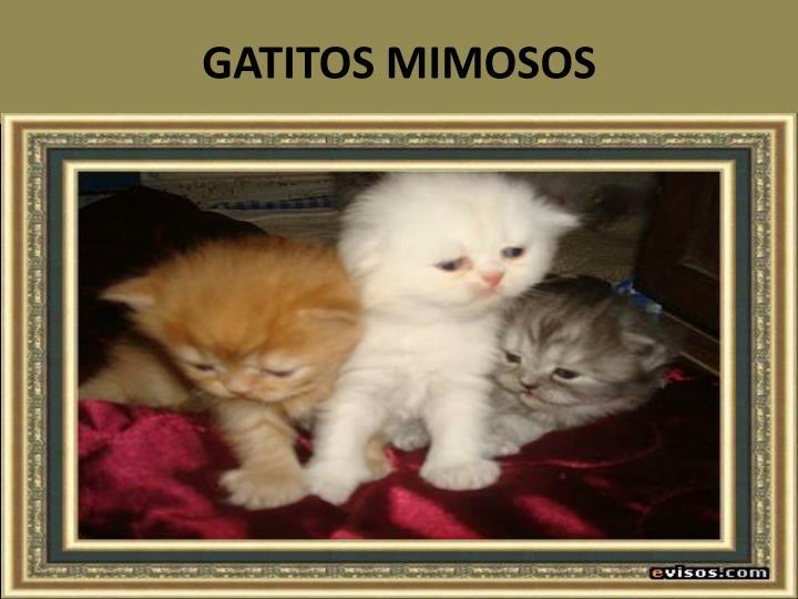 GATITOS MIMOSOS