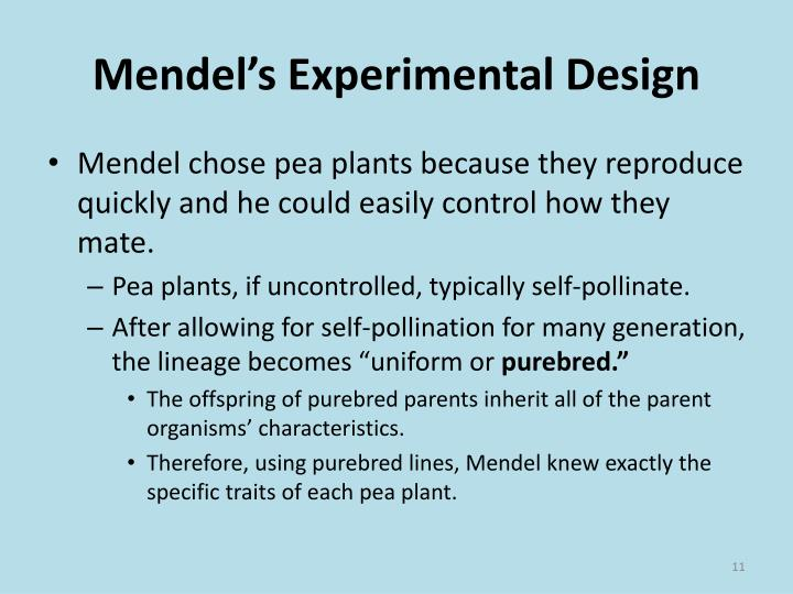 why mendel chose pea plant
