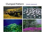 clumped pattern most common