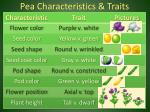 pea characteristics traits