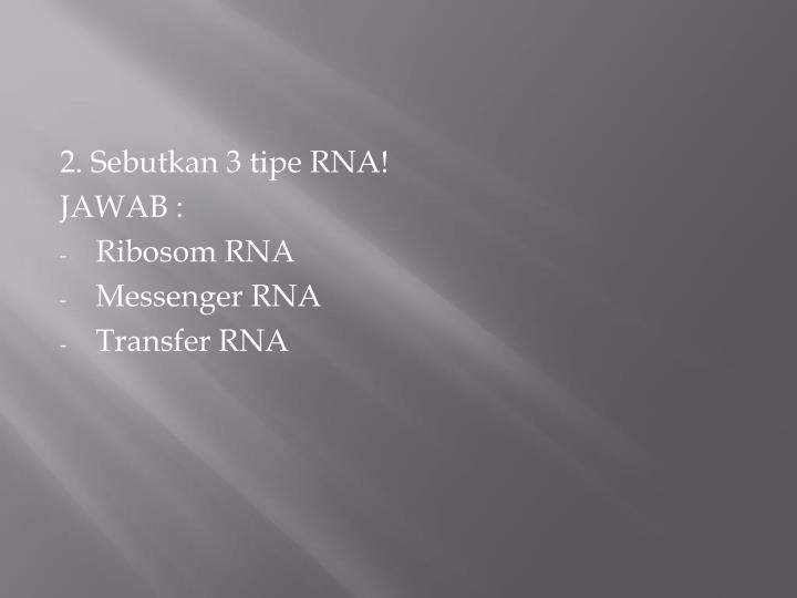 2. Sebutkan 3 tipe RNA!