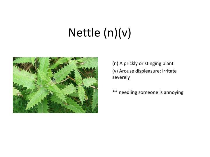 Nettle (n)(v)