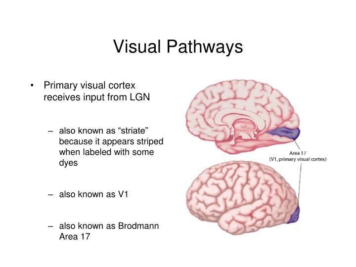 Visual pathways2