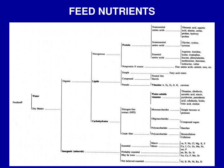 Feed nutrients