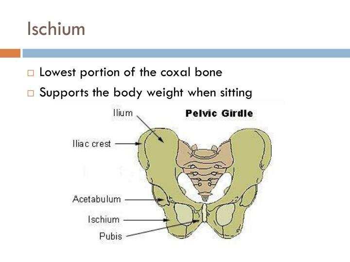 Pelvic Girdle Lower Limbs P 158 161