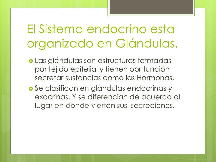 PPT - IV UNIDAD: Sistema Endocrino PowerPoint Presentation - ID:1898322