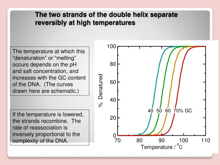 """The temperature at which this """"denaturation"""" or """"melting"""" occurs depends on the pH and salt concentration, and increases with the GC content of the DNA.  (The curves drawn here are schematic.)"""