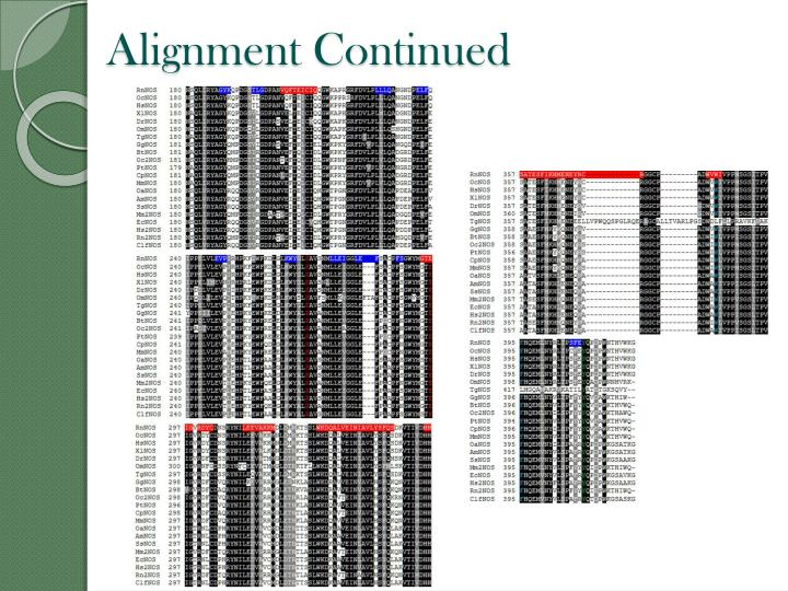Alignment Continued