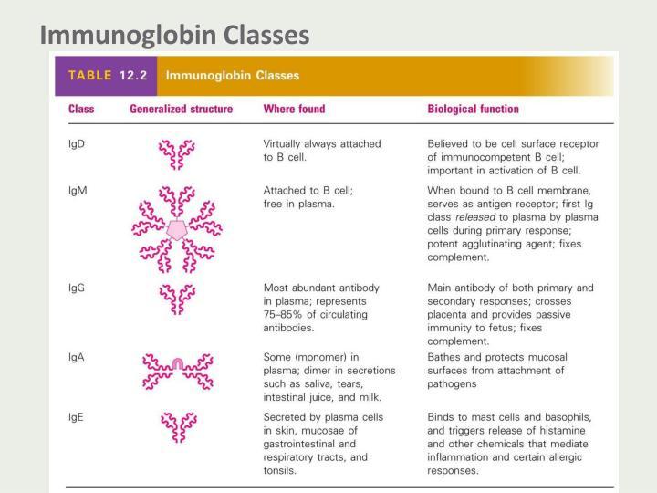 Immunoglobin Classes