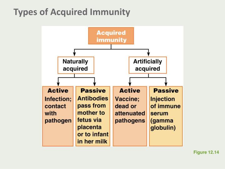 Types of Acquired Immunity