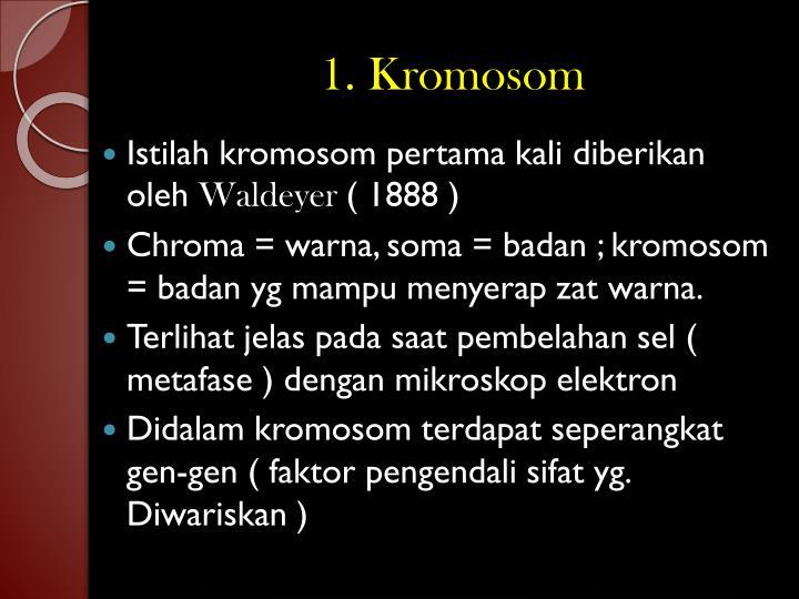 1 kromosom