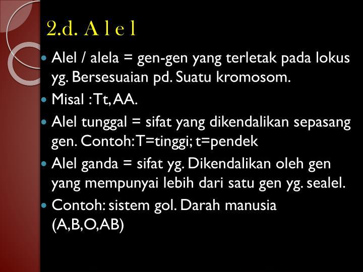 2.d. A l e l