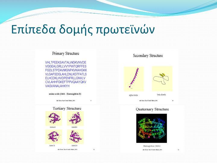 Επίπεδα δομής πρωτεϊνών