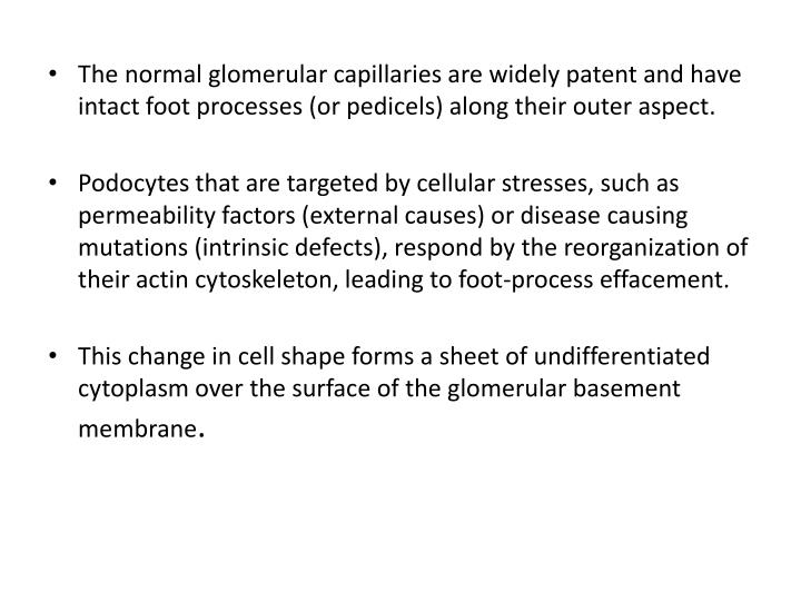 The normal glomerular capillaries are widely patent and have intact foot processes (or pedicels) along their outer aspect.