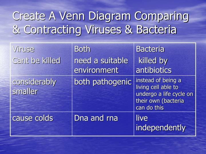 Ppt Bacteria Viruses Powerpoint Presentation Id1901218