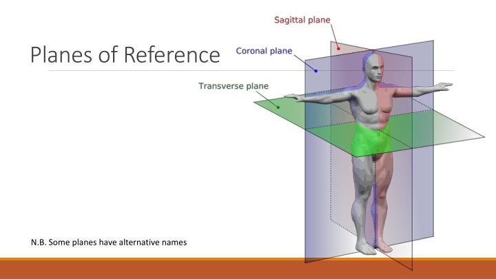 Ppt Anatomy Terminology Powerpoint Presentation Id1901804