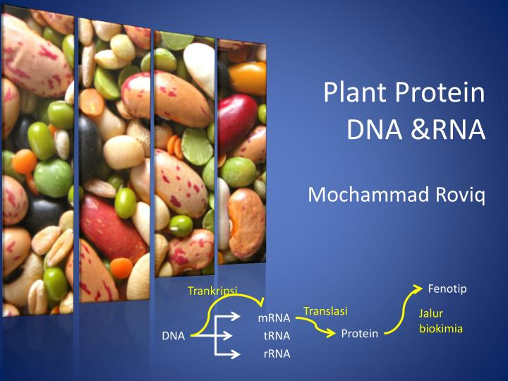 plant protein dna rna n.