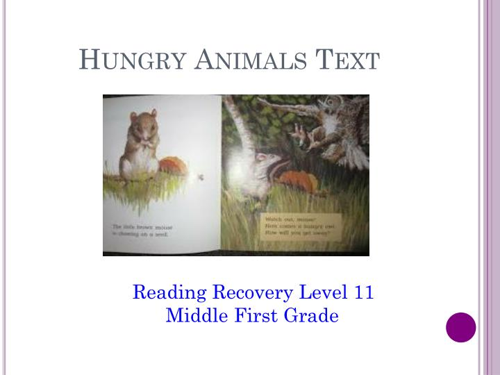 Hungry Animals Text