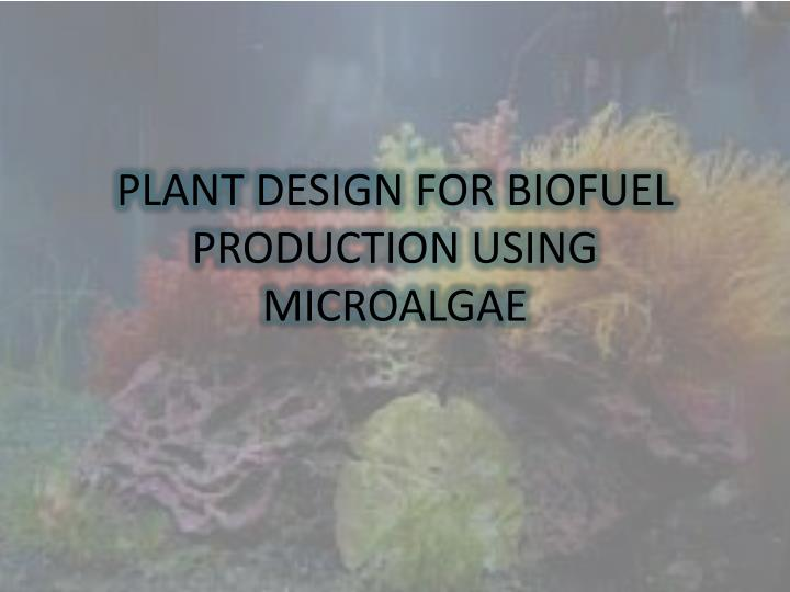 plant design for biofuel production using microalgae n.